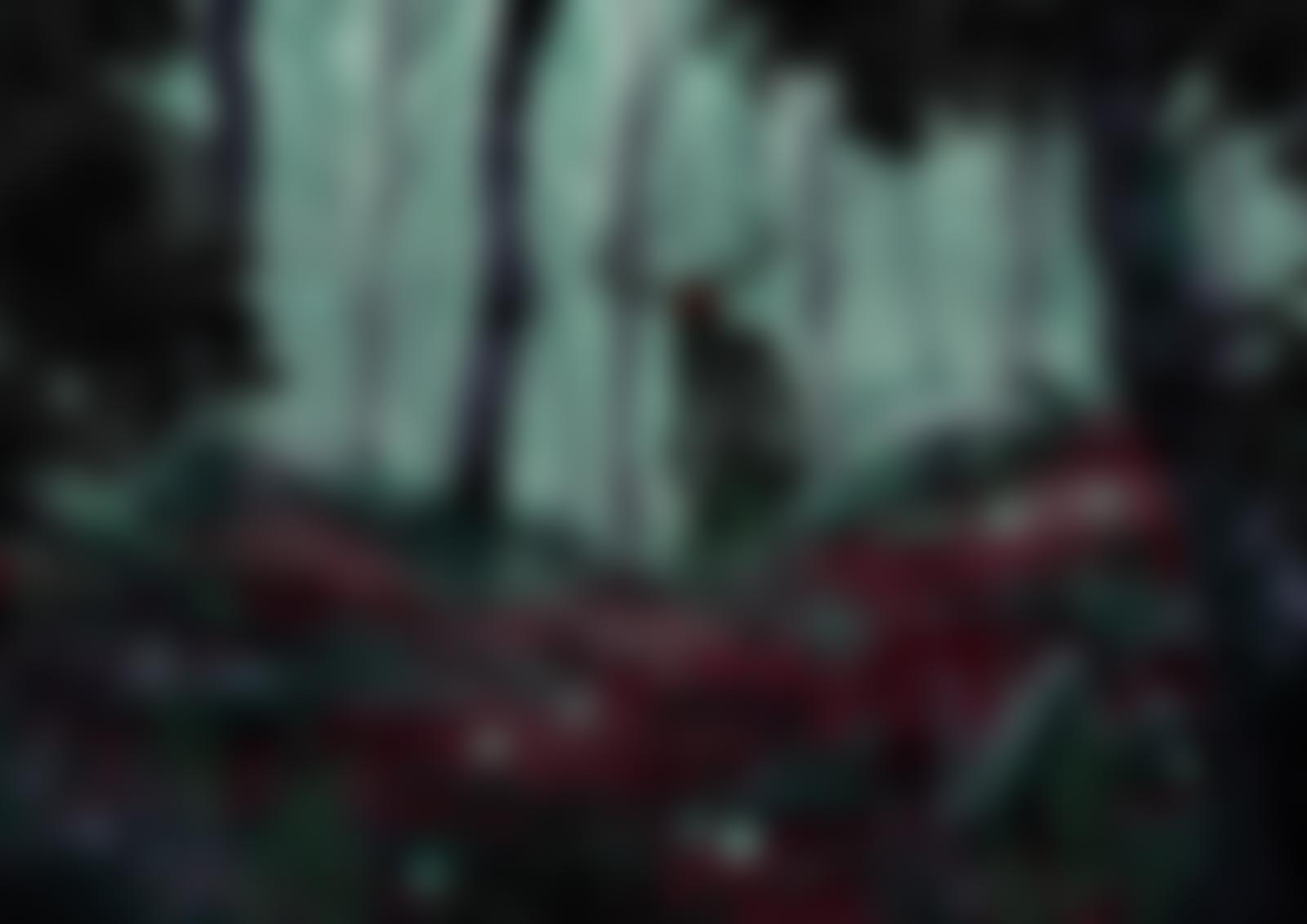 Darkwood Forest